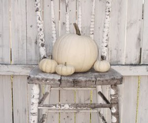 pumpkins in white chair image