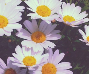 flowers and daisies image