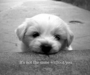 adorable, alone, and black and white image