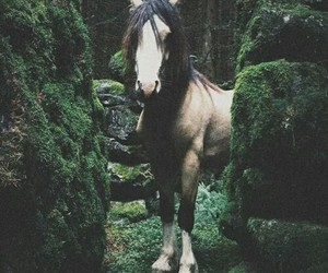 horse, animals, and nature image