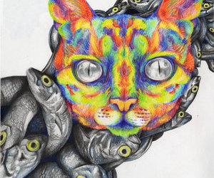 cat, fish, and sardines image
