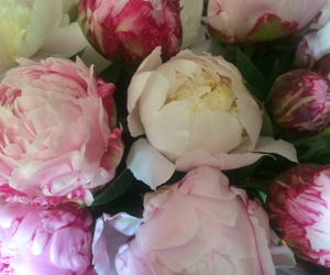 Fleurs, flowers, and pink image