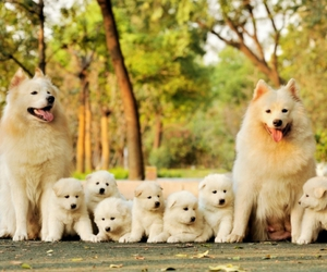 dog, family, and hapiness image
