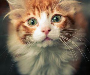 cat, cute, and beautiful image