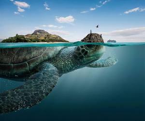 amazing, Island, and turtle image