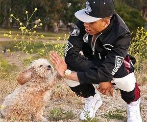 dog, singer, and man's best friend image