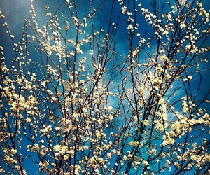nature, sunny day, and spring image