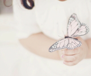 butterfly, delicate, and cute image