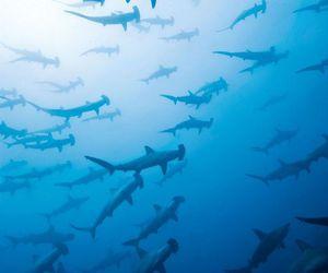 animals, costa rica, and fish image