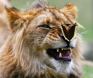 lion, butterfly, and animal image