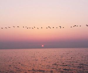 bird, sea, and sunset image
