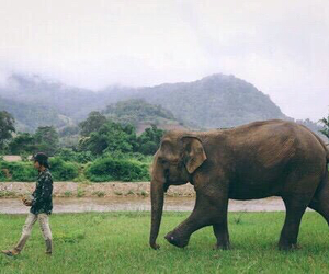 elephant, thailand, and green image