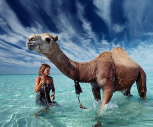 summer, animal, and camel image