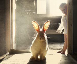 rabbit, baby, and bunny image