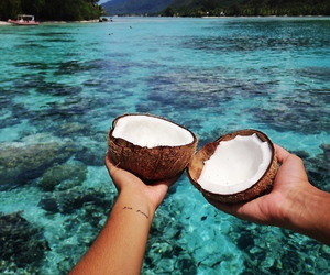 coconut, summer, and sea image