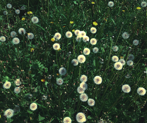 background, green, and dandelions image