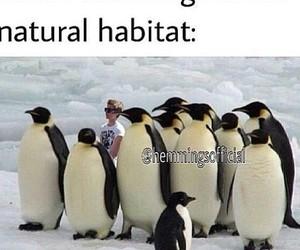 5sos, luke hemmings, and penguin image