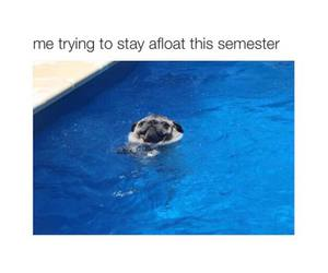 dog, funny, and semester image