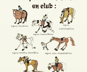 cheval, chevaux, and equestrian image