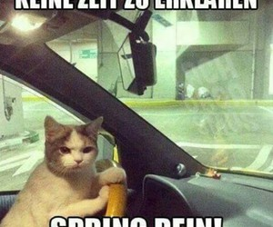 cat and auto image