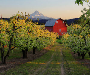 barn, earth, and farm image