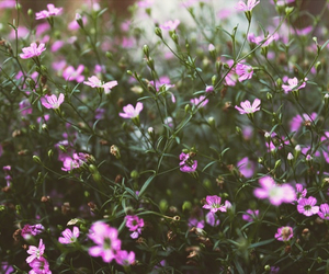 background, beautiful, and flowers image