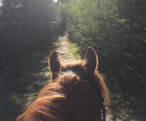 horse, inspo, and life image