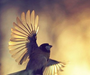bird, fly, and light image