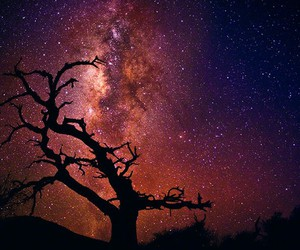 stars, peter lik, and tree of the universe image