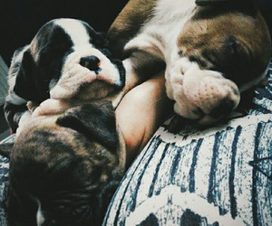 boxer, puppy, and love image