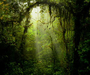 green, nature, and woods image