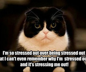 cat, funny, and stress image