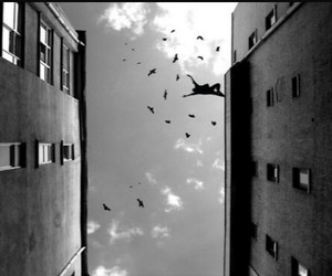 bird, black and white, and fly image