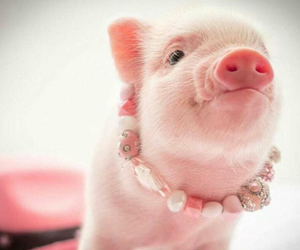 adorable, pig, and pink image