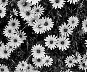 flowers, black, and white image