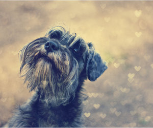 animal, bokeh, and dog image
