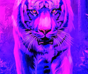 tiger and purple image