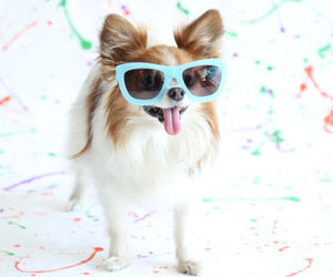 cool, dogs, and pets image