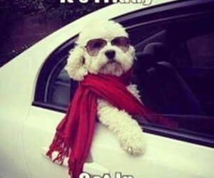 dog, funny, and weekend image
