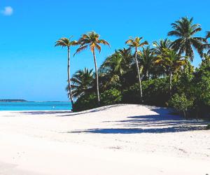 beach, sand, and sea image