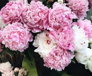 boho, pale, and bouquet image