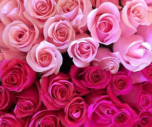 roses, special, and beautiful image