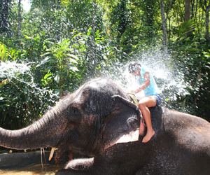 elephant, funny, and summer image