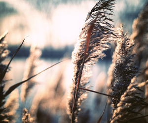 50mm, cattails, and fall image
