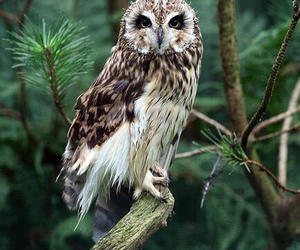 owl, bird, and nature image