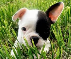 animals, puppies, and love image