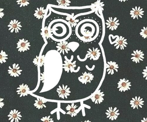background, flowers, and owl image