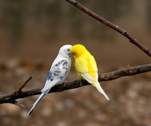 bird, kiss, and nature image