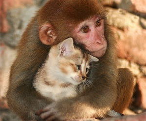 animals, cute, and aww image