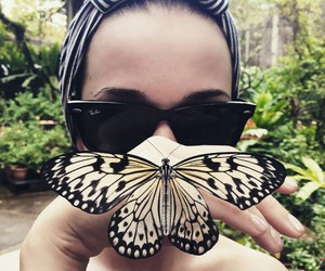 butterfly, love, and katy image